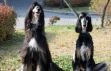 Klonlanan köpek tekrar klonlandı