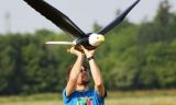 Çin'de yeni nesil teknoloji robot kuşlar