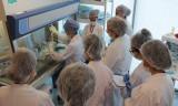 Kadavradan organ nakli tarihe karışacak