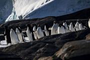 Antarktika araştırma ekiplerinin gözdesi oldu