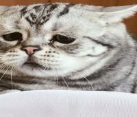 Sosyal medyada kedi Luhu paylaşım rekorları kırdı