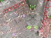 Anne fare ve yavrularının ip gibi dizildiği video büyük ilgi görüyor