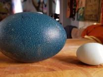 İnternetten satın aldığı yumurtadan bakın ne çıktı?