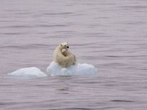2018'de denizlerde sıcaklık rekoru kırıldı