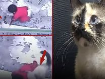Sosyal medya bu anı konuşuyor! Kedi bebeği son anda kurtardı