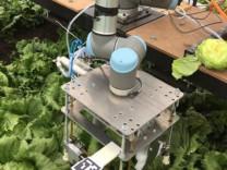 Kendi başına marul toplayabilen robot