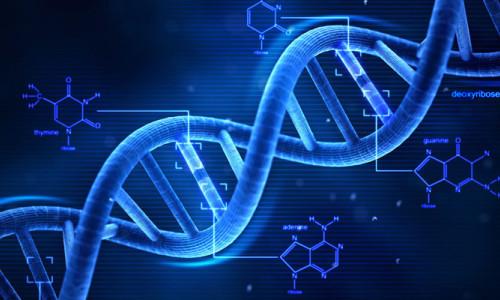 Yaşlanmayı geciktiren gen bulundu!