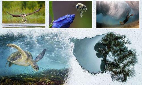 Yılın Doğa Fotoğrafçısı yarışmasından müthiş kareler