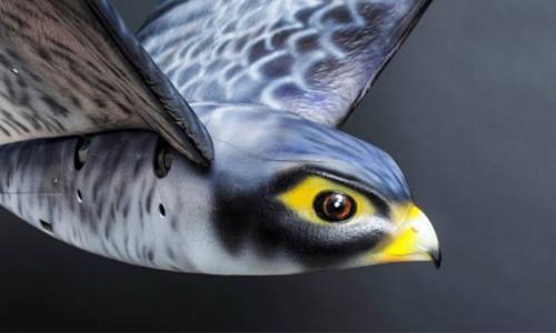 Robot kuş havaalanında güvenliği sağlayacak