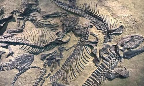 200 milyon yıllık dev dinazor fosili bulundu