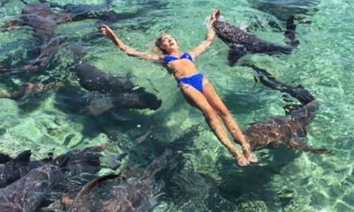 Fotoğraf uğruna, köpekbalıklarına yem oluyordu