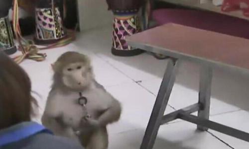 Çin'de maymun, bakıcısının telefonundan sipariş verdi!