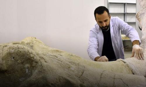 7,5 milyon yıllık fosillere ince işçilik