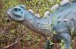 Bebek dinozora ait ayak izi bulundu