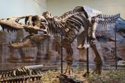 T-rex için yeni araştırma sonucu şaşırtıyor
