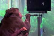 Elon Musk'ın 'beyin çipi' projesi, ilk kez bir maymun üzerinde test edildi