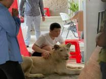 Sahibinin TikTok fenomeni yapmaya çalıştığı aslan kurtarıldı
