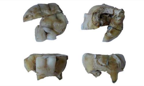 Sibirya'da 14 bin yıllık adam bulundu