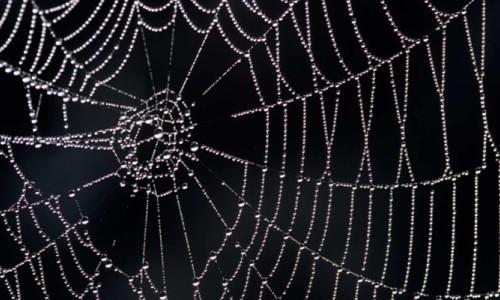 Örümcek ağlarındaki titreşimler müziğe dönüştürüldü