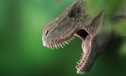 Avustralya'nın en büyük dinozor türü keşfedildi